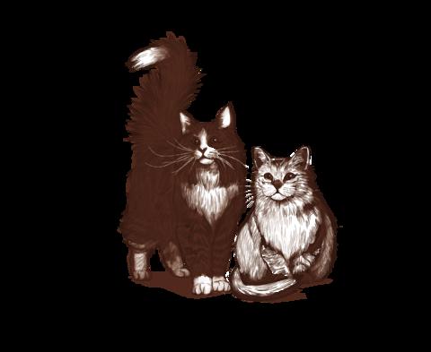 gatos-original-large.png