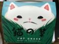 貓之草 超簡易水種貓草